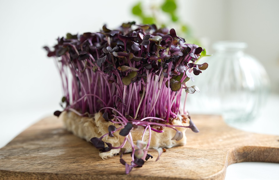 Little Great Vegetables in the Kitchen: Benefits of Micro Greens